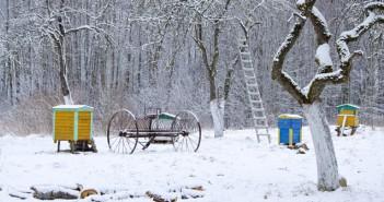dein garten im winter