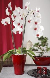 orchideen hallo frau das informationsportal f r frauen. Black Bedroom Furniture Sets. Home Design Ideas