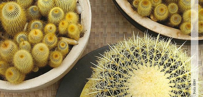 zimmerpflanzen vermehren hallo frau das informationsportal f r frauen. Black Bedroom Furniture Sets. Home Design Ideas