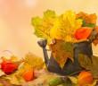 Der Herbst ist da – So dekoriert Laub dein Zuhause
