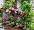 Frühling auf dem Balkon: Wie der Blumenkasten wieder bunt wird.