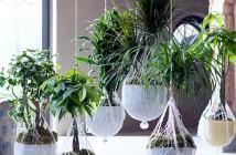 Header Pflanzen im Winter