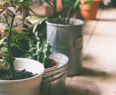 Pflanzen, die kaum Licht brauchen
