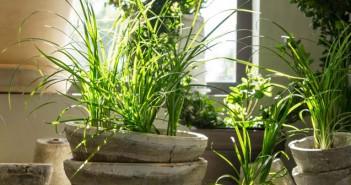 Zimmerpflanzen selbst vermehren