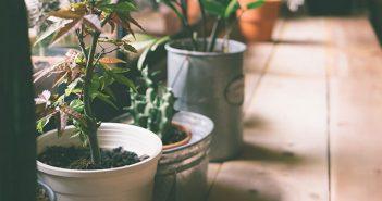 Header Zimmerpflanze die kaum Licht braucht