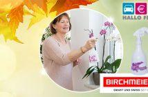 Header November Lichtblicke Birchmeier