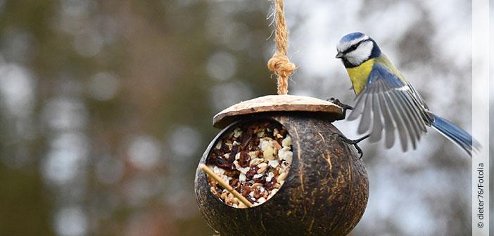 Header Ist Vogelfüttern auf dem Balkon erlaubt?