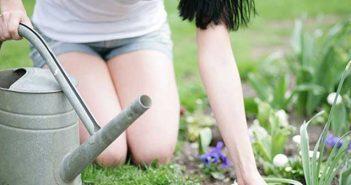 Header Frühling Gartenarbeit