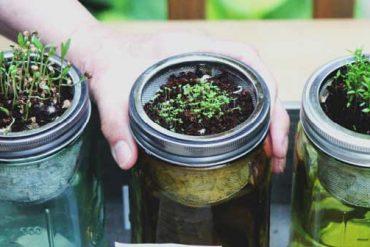 7 Gartentipps für die Großstadt