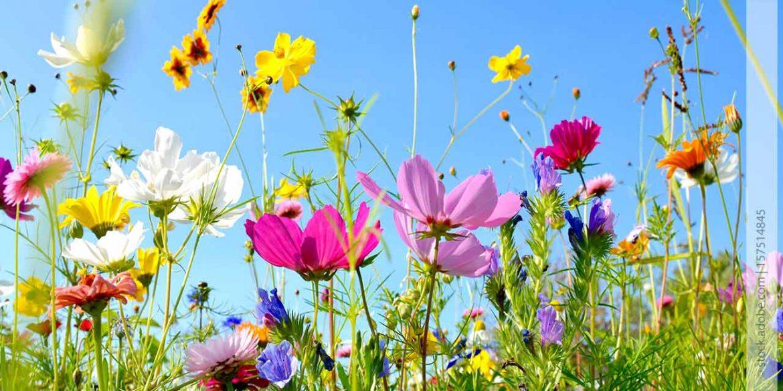 Blumenwiese to go