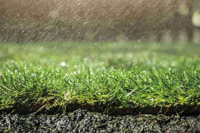 Für den gesunden Garten: Bewässerung im Sommer