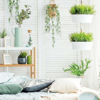 Tipps für Zimmerpflanzen