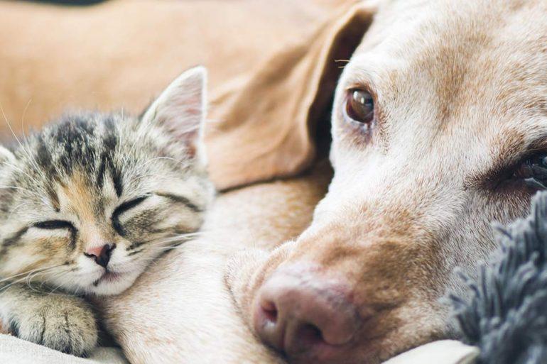 Spendenmarathon fuer Tiere