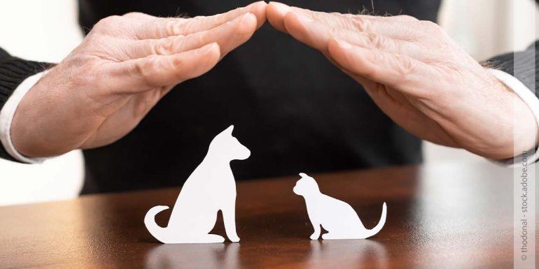 7 Dinge, die man vor der Anschaffung eines Haustiers geklärt haben muss